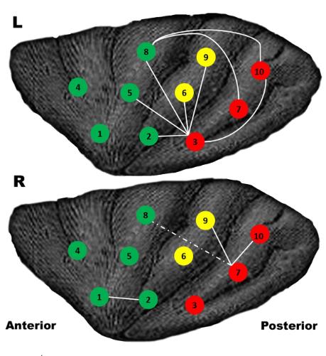 Neue Studie beweist das Zocken dem Gehirn gut tut-01
